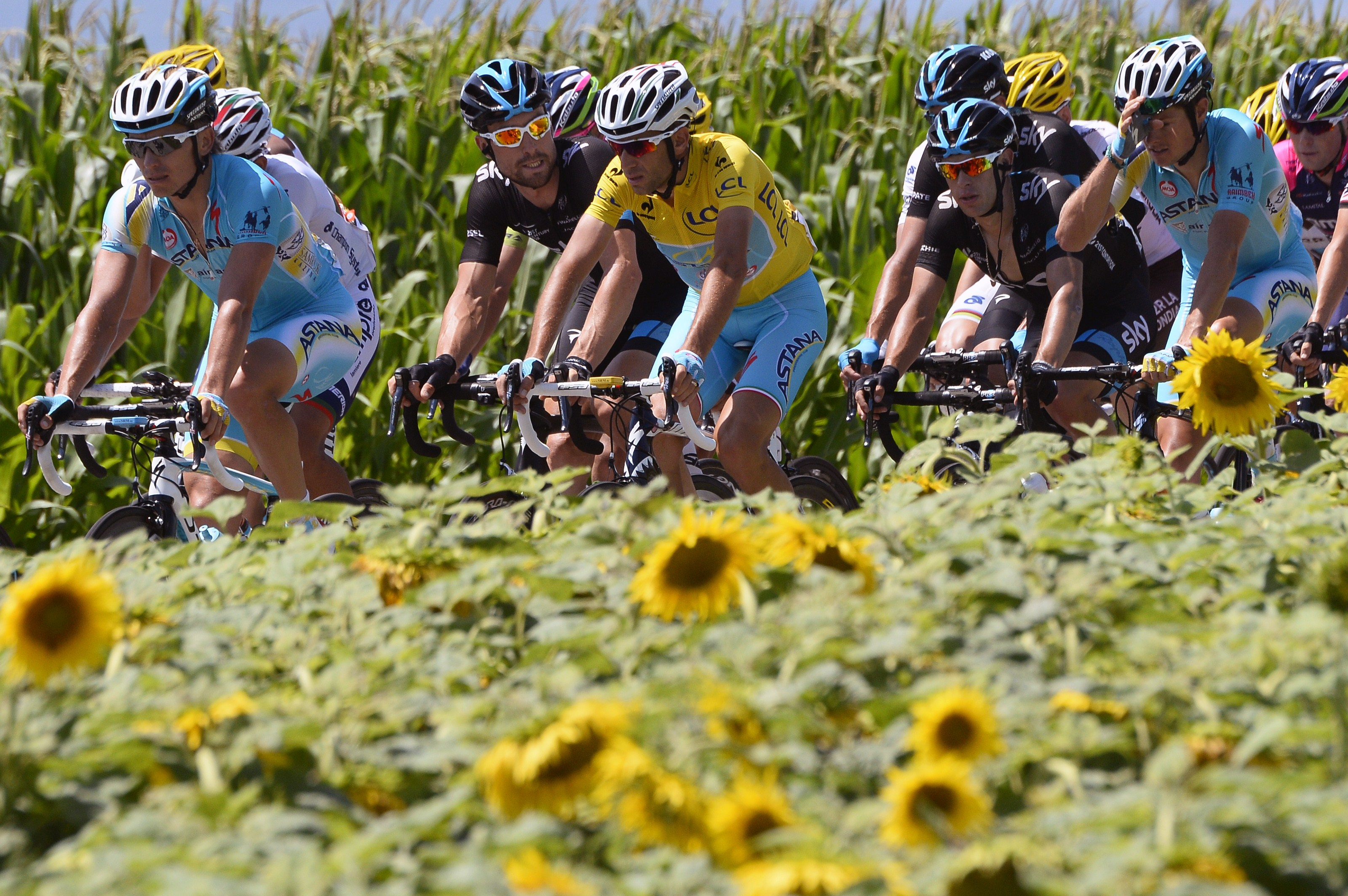 Italy's Vincenzo Nibali wearing the overall leader's yellow jersey, Austria's Bernhard Eisel and Australia's Richie Porte ride in the pack past a sunflowers field during the 197.5 km thirteenth stage.