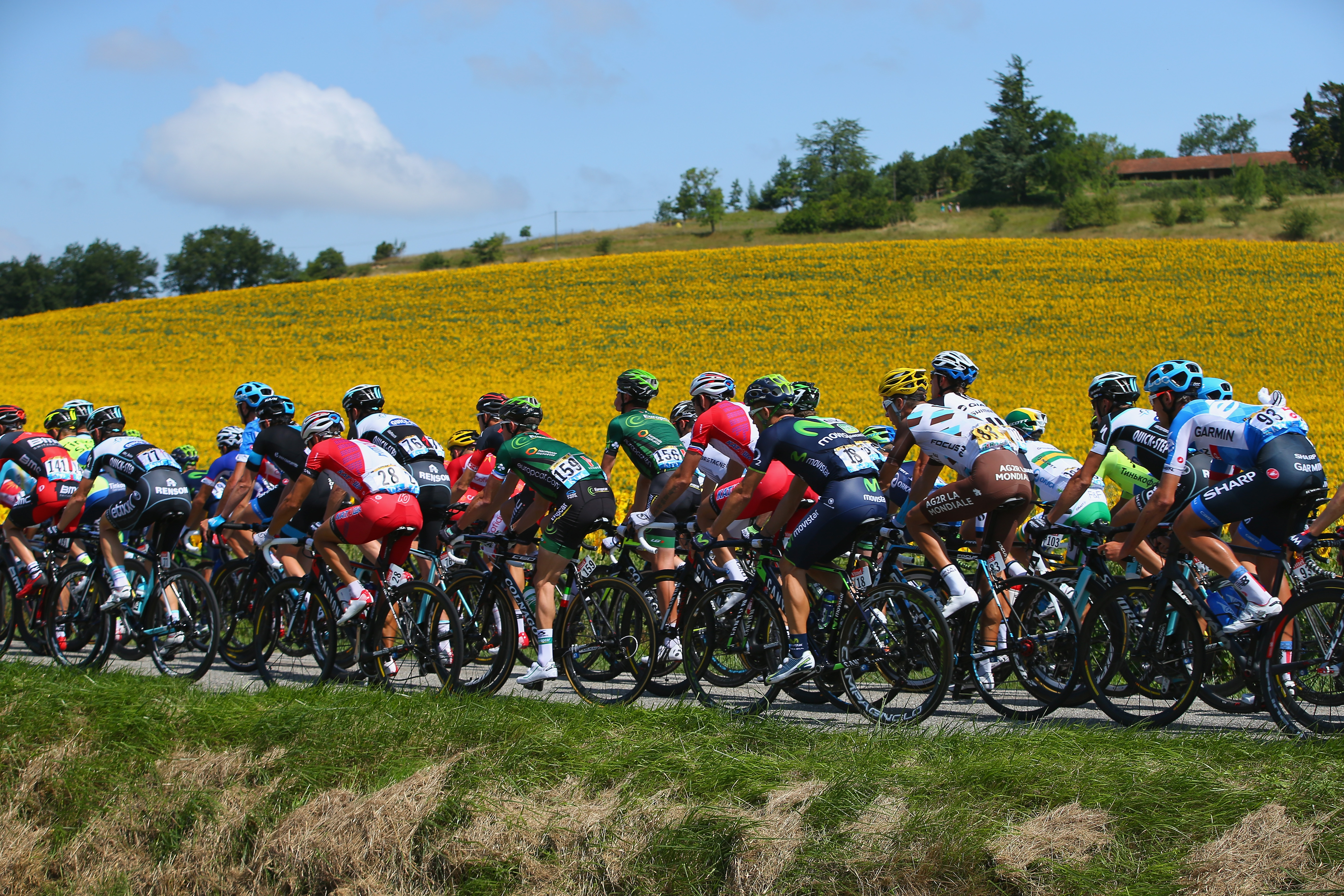 The peloton passes by sunflower fields during the sixteenth stage of the Tour de France, a 238km stage between Carcassonne and Bagneres-de-Luchon.