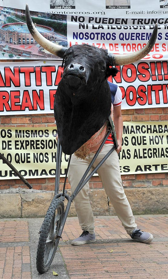 A Colombian apprentice bullfighter jokes with the head of a bull. A ban on bullfighting in Colombia's capital was lifted this year by the country's highest court. Mayor Gustavo Petro had barred bullfighting nearly two years ago on grounds it was cruel to the animals.