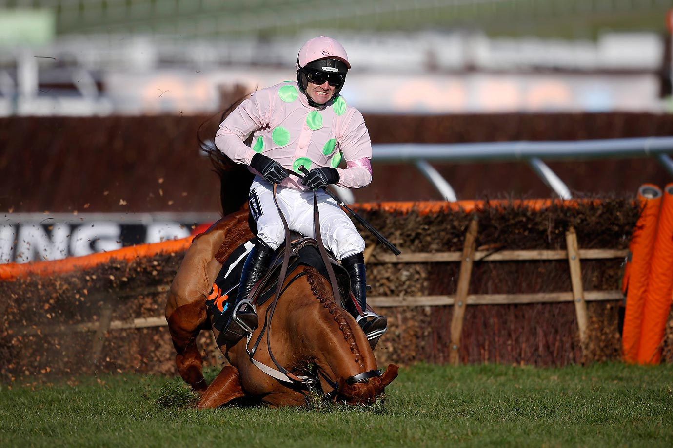 Ruby Walsh falls from Annie Power in The OLBG Mare' Hurdle Race at Cheltenham racecourse.