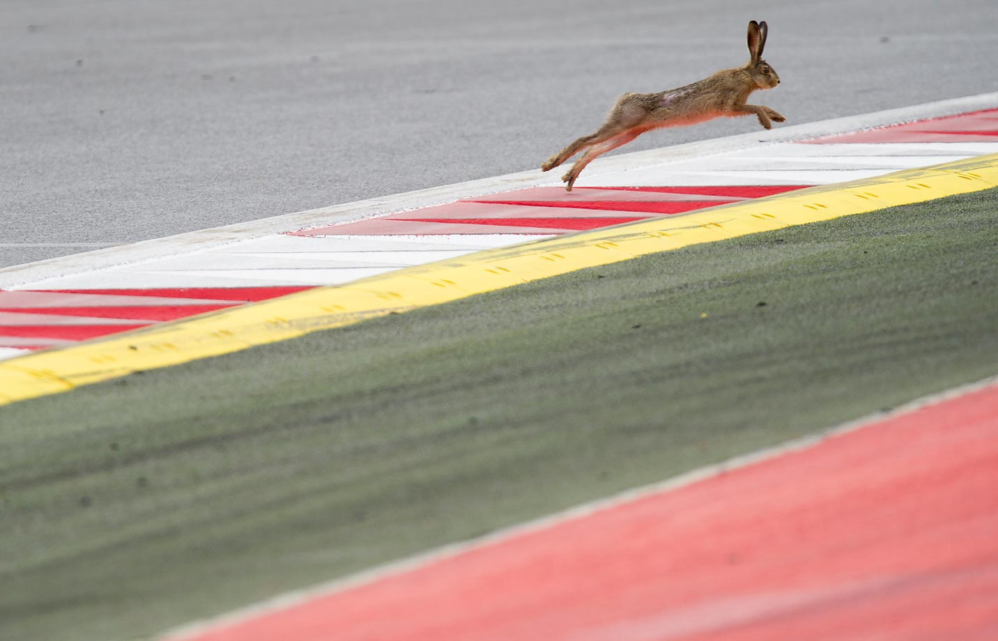A hare jumps across the track at the Red Bull Ring ahead of the Austrian Formula One Grand Prix.