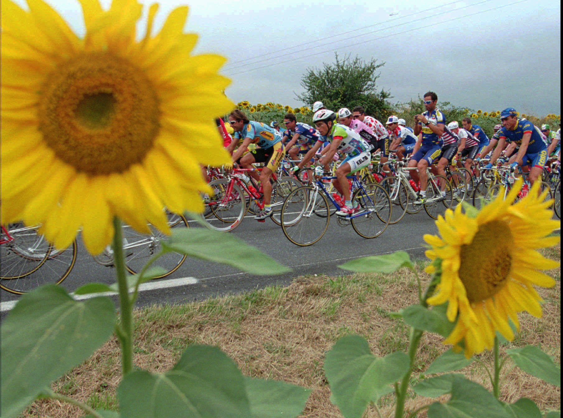 Sunflowers frame cyclists as the pack rides by under cloudy skies during the 14th stage of the Tour de France cycling race in July 1995.