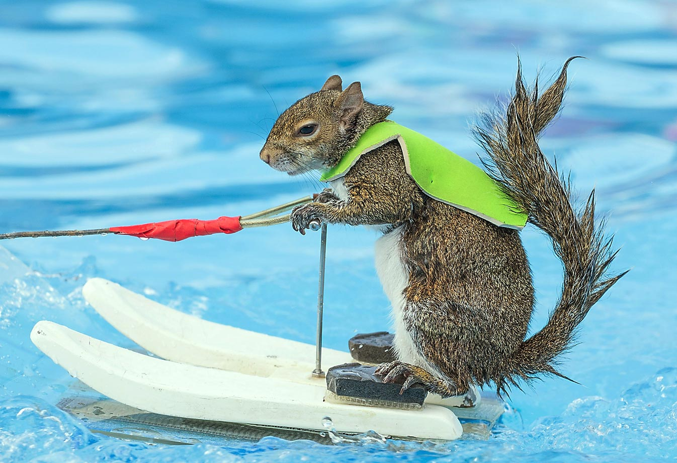 Twiggy the Water-Skiing Squirrel gives fans a thrill during X Games Austin on June 5 at Circuit of The Americas in Texas.