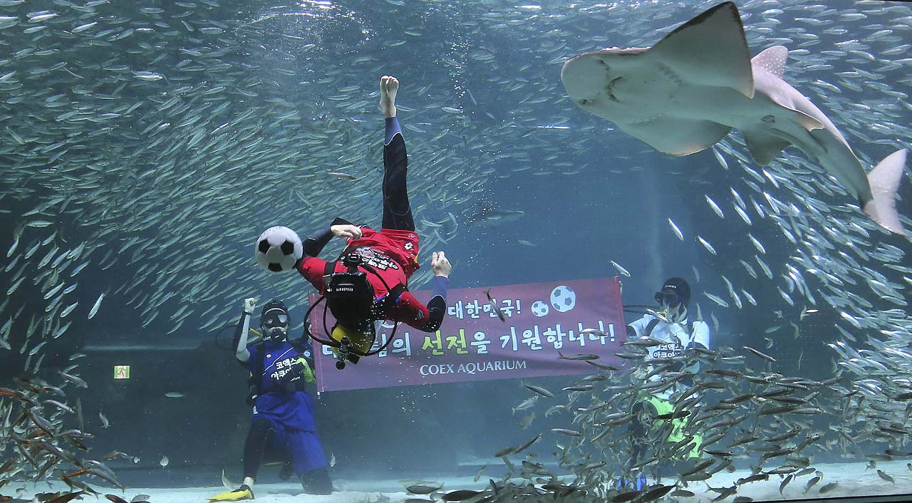 "A diver wearing a South Korean soccer fan uniform performs with sardines during an event to promote the 2014 Brazil World Cup, at the COEX Aquarium in Seoul, South Korea, Monday, June 9, 2014. South Korea will face Russia, Belgium and Algeria in the 2014 Brazil World Cup. The writing on the banner reads "" We hope for the success of the national soccer team."""