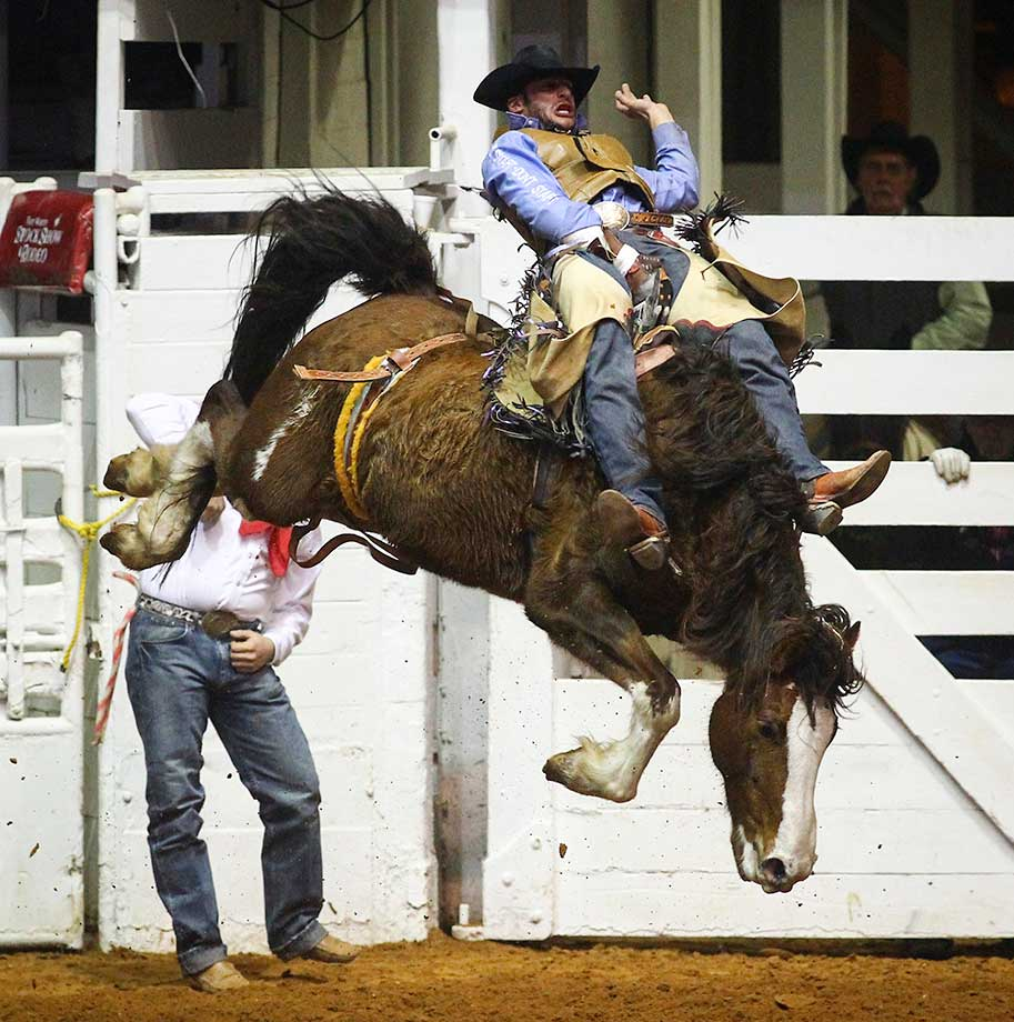 Cody Kiser rides for a score of 80 in the bareback bronc riding event at the Fort Worth Stock Show and Rodeo in Fort Worth.