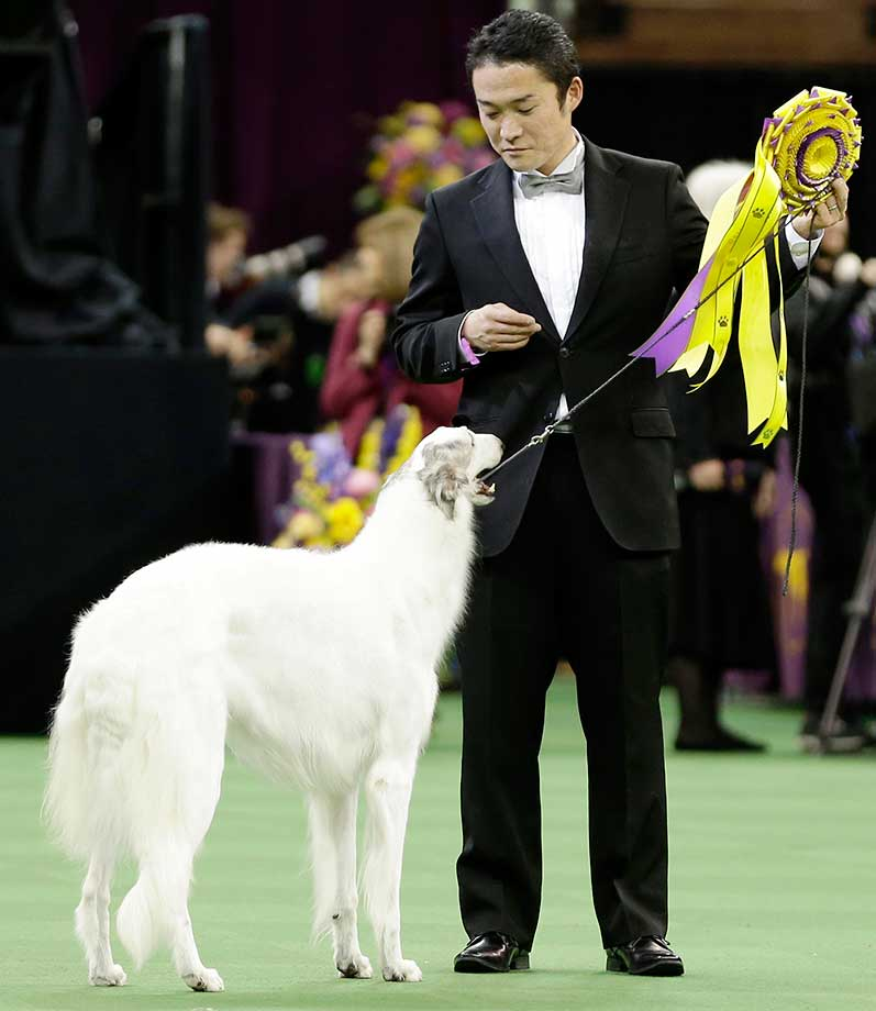 Lucy, a borzoi, and her handler, Shota Hirai, stand in the ring after winning reserve best in show at Westminster.