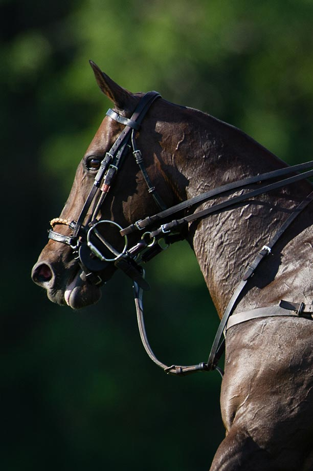 Polo Pony ridden by Joaquin Panelo during the Turkish Airlines match against Airstream.