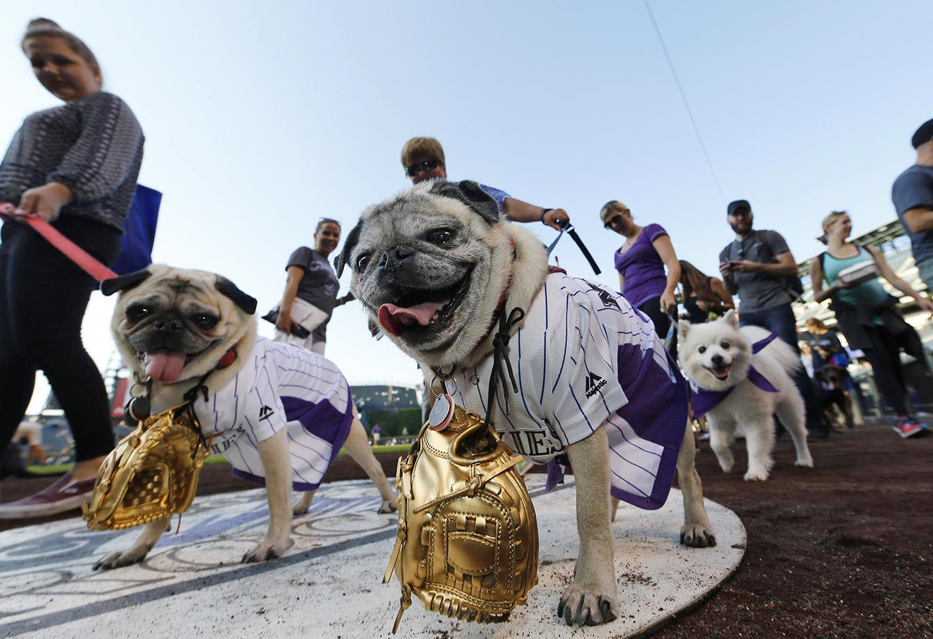 Another of those Bark in the Park event was held in Denver last week.