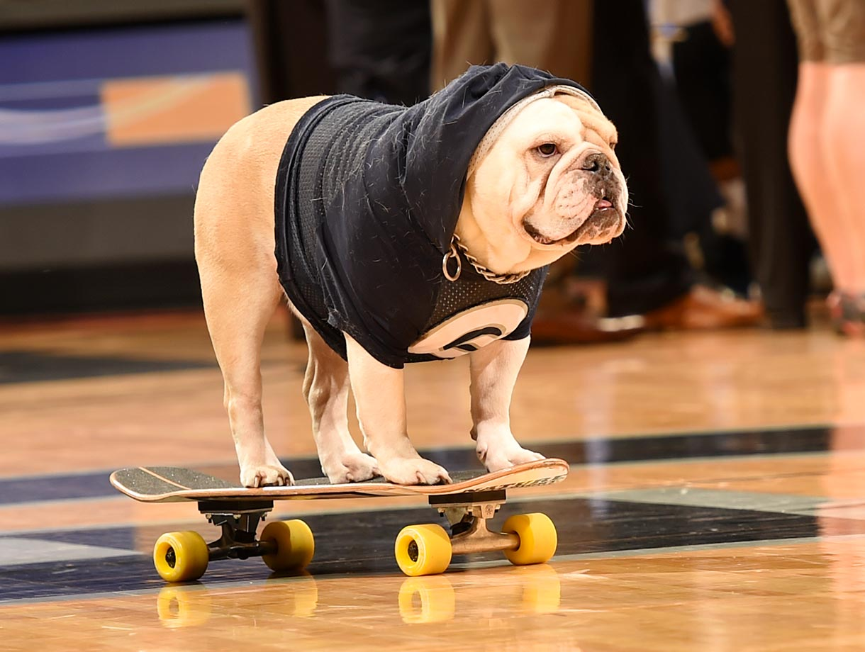 Georgetown Hoyas mascot Jack the Bull Dog on a skateboard during a game against the Monmouth Hawks.