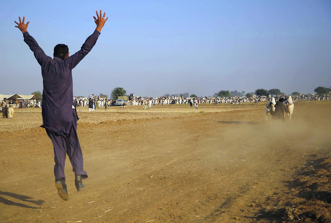 A Pakistani farmer freaks out a little after the start of a race in which 200 bulls were competing on a 400-meter length field near the Pakistani capital city Islamabad.