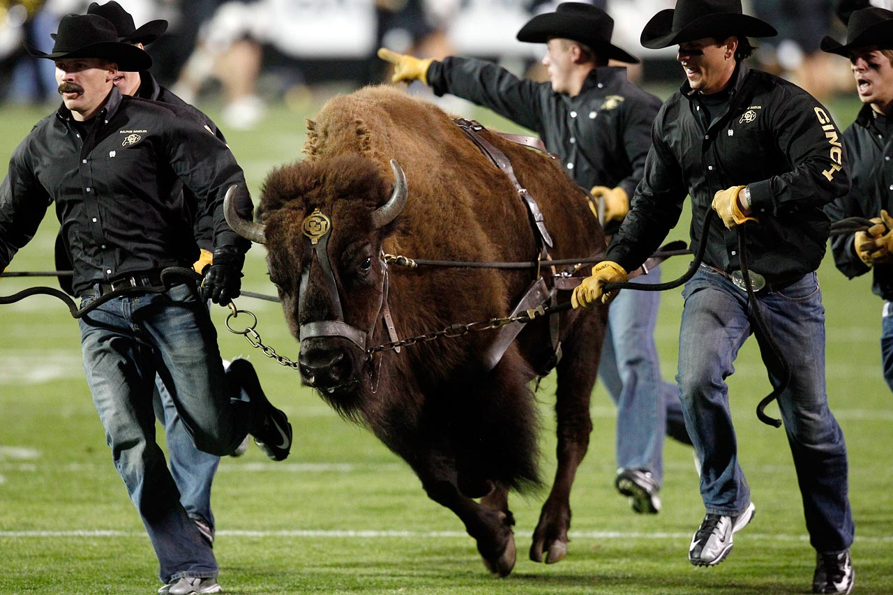 College students near a real-life buffalo. What could go wrong? (Are we sensing a trend?)