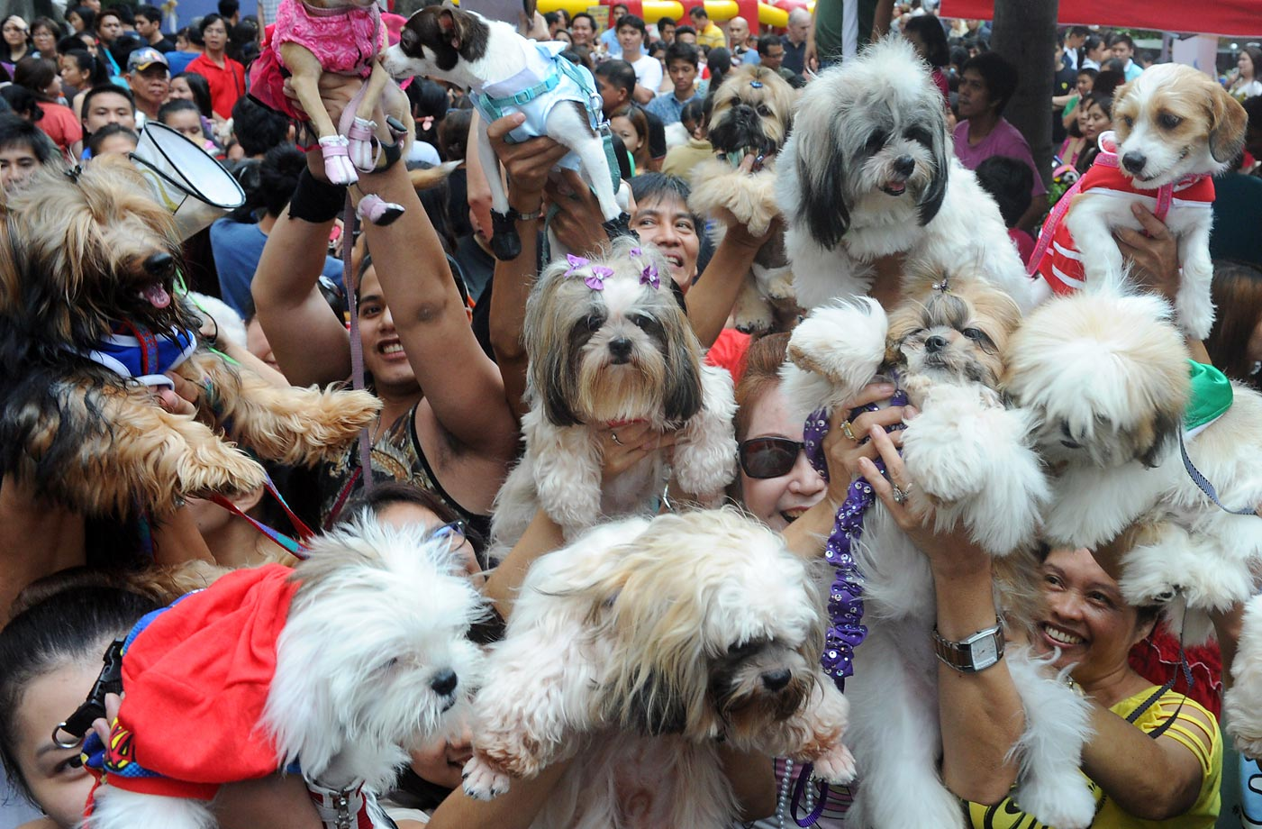 The scene from World Animal Day in Manila.