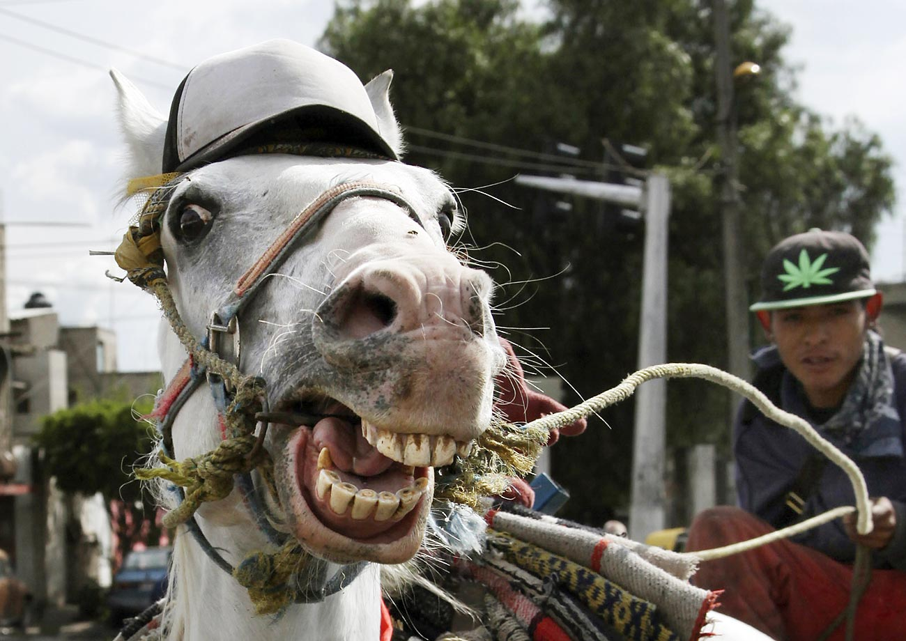 Tiburon, a horse formerly trained for the Mexican rodeo, now pulls a garbage collection cart in a neighborhood on the outskirts of Mexico City.