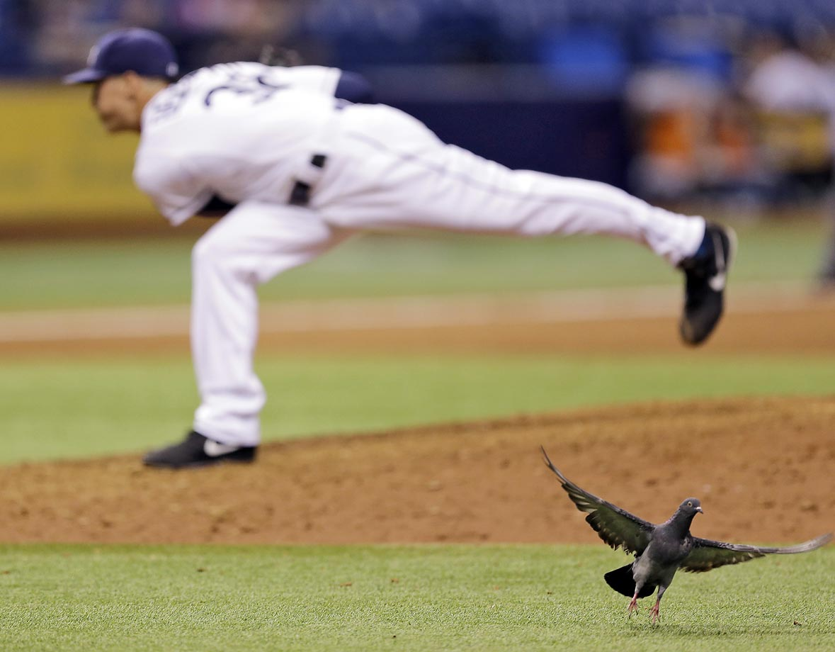 A bird takes flight as Rays relief pitcher Jeff Beliveau delivers to the Detroit Tigers in the 11th inning.