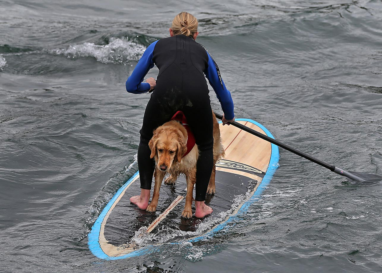 Katherine Thomas gives dog Loo Loo a ride on her paddle board.