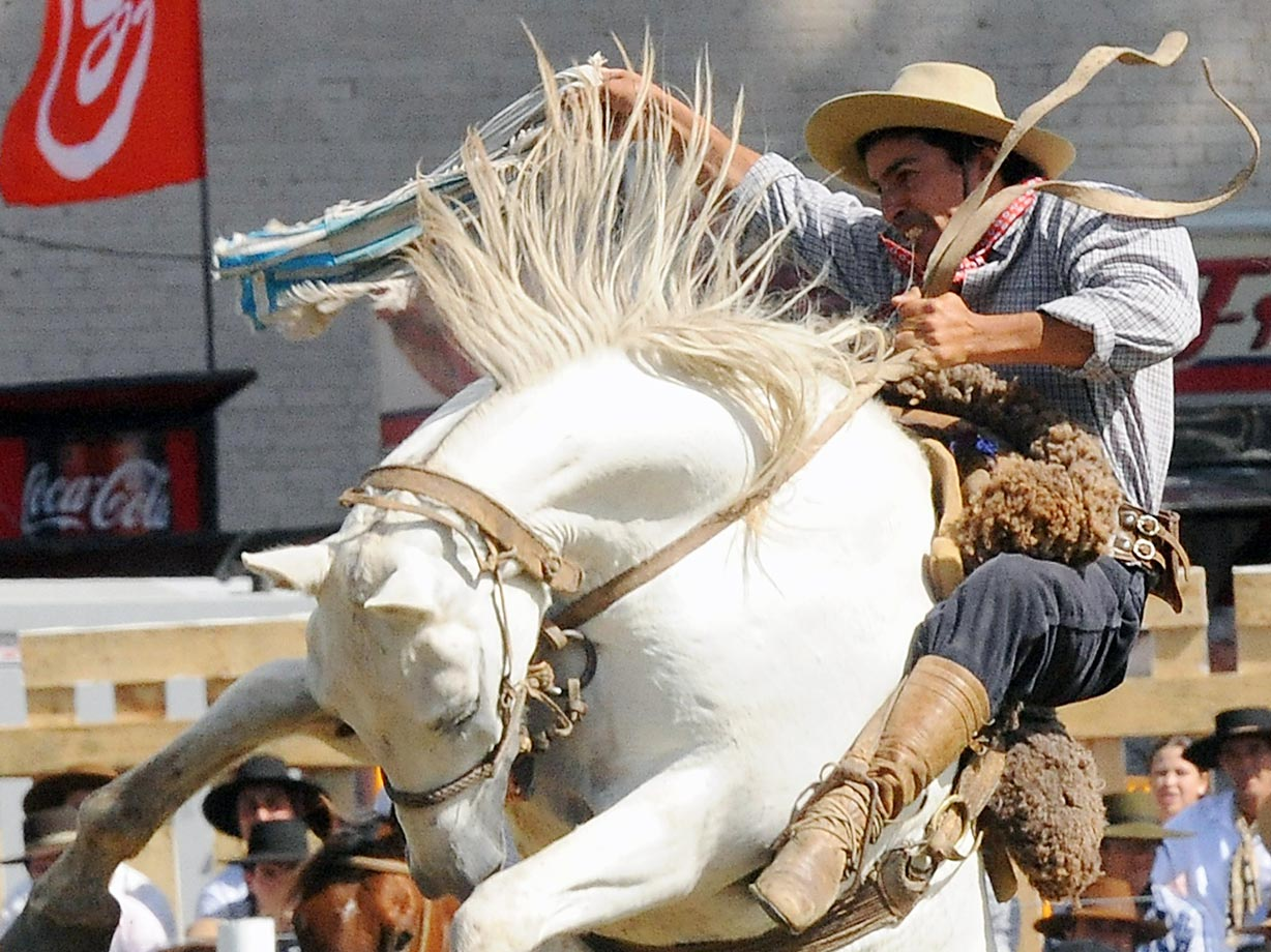 A gaucho rides a bucking colt during the traditional rodeo week in Montevideo, Uruguay.
