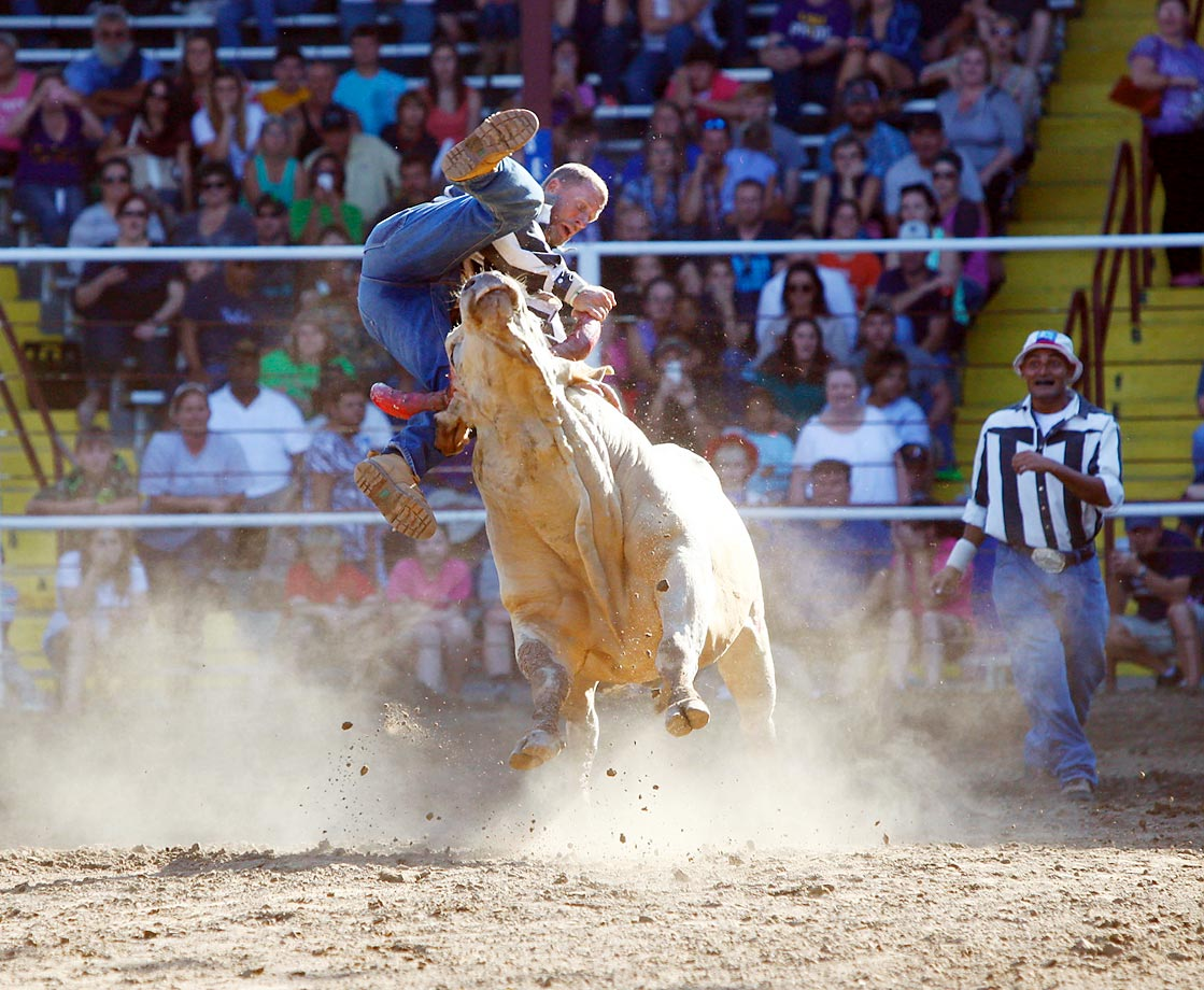 A rider gets bucked off a bull during the annual Angola Prison Rodeo at Louisiana State Penitentiary.