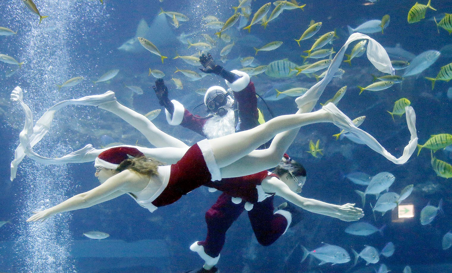 Divers dressed as Santa Claus perform at the Aquaplanet in Goyang, South Korea.