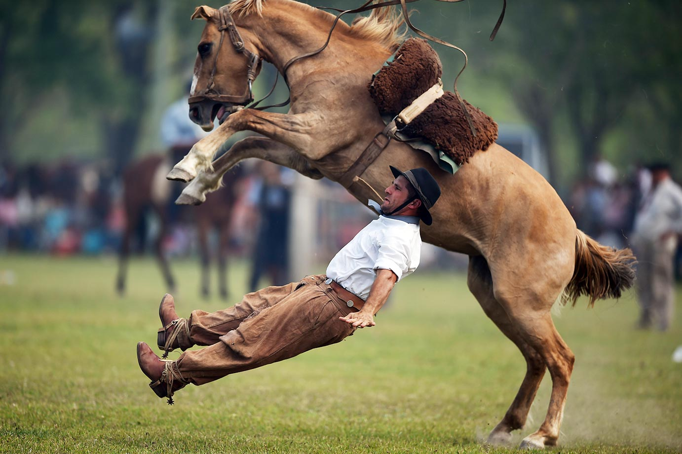 "A gaucho falls from a colt at a rodeo exhibition during during ""Tradition Day"" in San Antonio de Areco, Argentina."