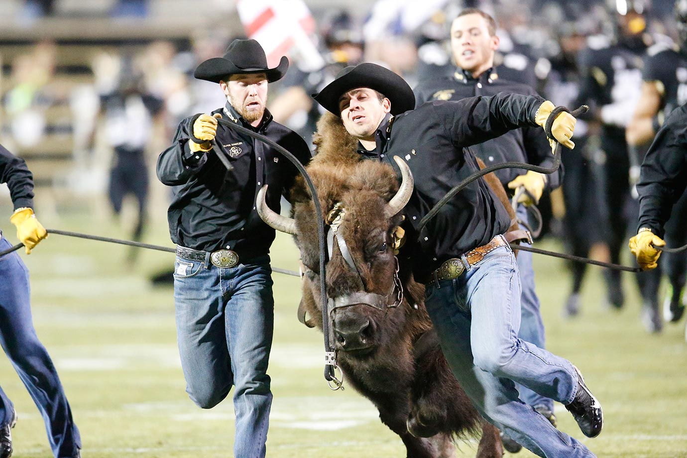Handlers guide Ralphie, the Colorado Buffaloes mascot, before a game against USC.