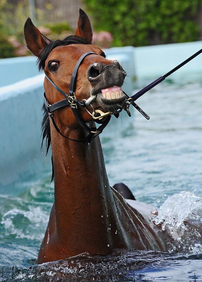 Who Shot Thebarman (the Caulfield Cup runner)  is taken for a swim at Flemington Racecourse.  Whoever said being a horse isn't fun.