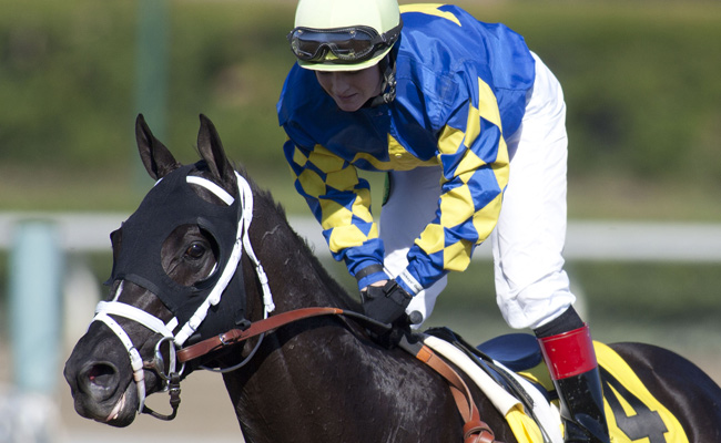 Shanghai Bobby, ridden by Rosie Napravnik, won the Breeder's Cup Juvenile Grade 1 race in November.