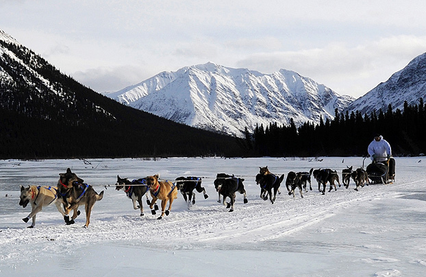 The winner of the Iditarod, the biggest race for sled dogs, only wins $50,000.