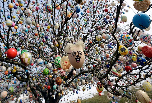 Continuing our series of eggs-citing photos, we find more exotic varieties -- 10,000 in all -- hanging out in Volker and Christa Kraft's apple tree in Saalfeld, Germany. The Krafts got the bright idea to adorn the tree with painted hen's eggs rather than the more problematic kind produced by the Elephant Bird (see previous slide) in 1965 as amusement for their kids and grandchildren, who were easily amused indeed. It now draws thousands of easily amused and no doubt hungry visitors and tourists that Mr. Kraft shoo off his lawn with a shootin' iron.
