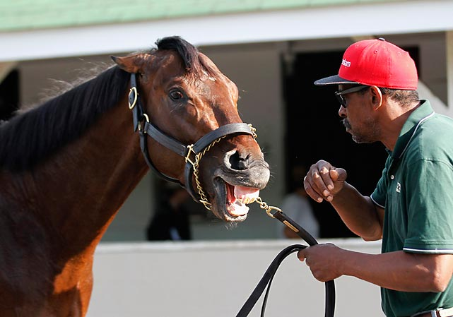 Kentucky Derby winner Orb enjoys a hearty horse laugh at the expense of all those who wagered on him to win the Preakness, a group that apparently includes the groom on the right.