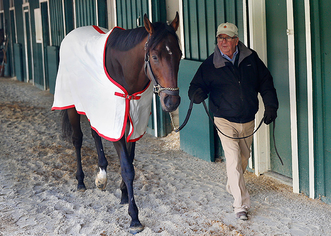 Trainer Shug McGaughey walks Kentucky Derby winner Orb in preparation for the Preakness.