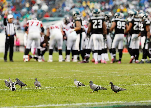 The Atlanta Falcons and Philadelphia Eagles huddle as pigeons walk on the field at Lincoln Financial in Pennsylvania.