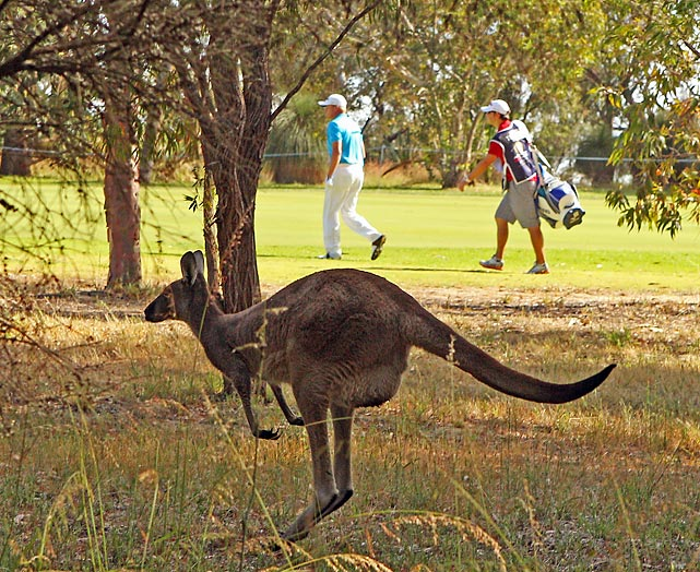 Thomas Norret of Denmark walks the 4th hole in Perth, Australia, as a kangaroo hops past.