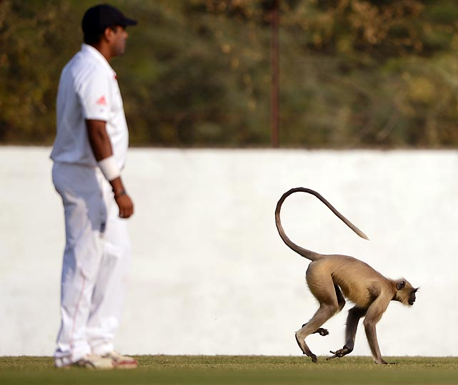 A monkey invades the field during Day 2 of a tour match between England and Haryana in Ahmedabad, India.