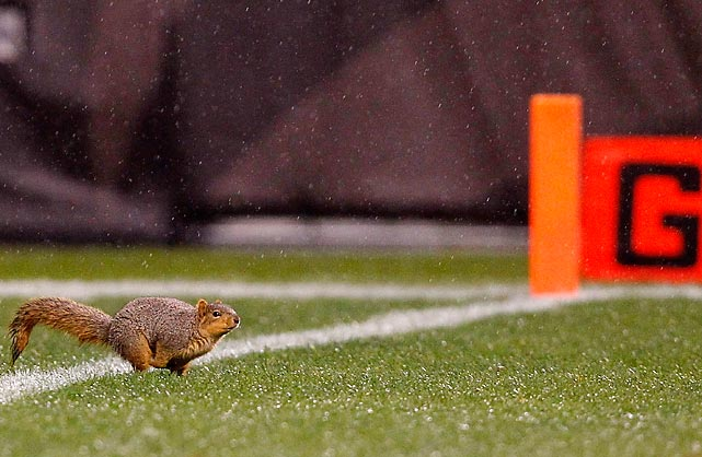 A squirrel scores at Cleveland Browns Stadium in Ohio.