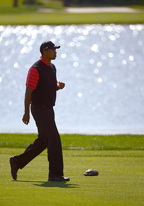 Tiger Woods walks past a turtle on the sixth fairway during the Arnold Palmer Invitational in Orlando.