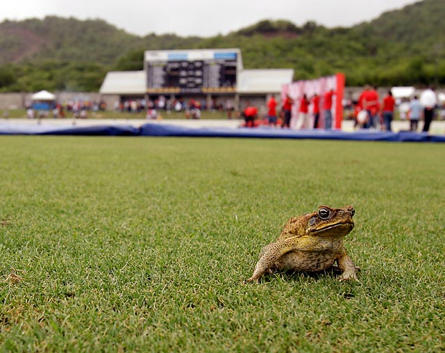 A toad sits on the pitch during an international match between India and the West Indies at Beausejour Cricket Ground, in Gros-Islet, St. Lucia.