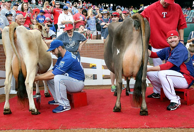 Squeeze play: Royals catcher George Kottaras and pitcher Robbie Ross of the Rangers look udderly amused as they try to milk their bodacious bovines for all they're worth before a ballgame in Arlington, Texas.