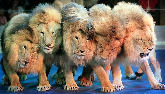 The Lions' offensive line looks ready to go.