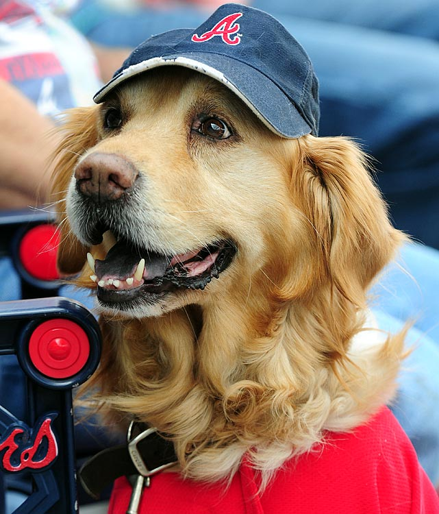 It's the dog days of summer, so here are some pics of dogs at the ballpark this season.