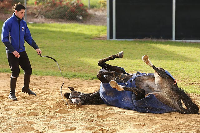 Ready yer wagers, mates, this horse is on a roll at Werribee Racecourse in Melbourne, Australia.
