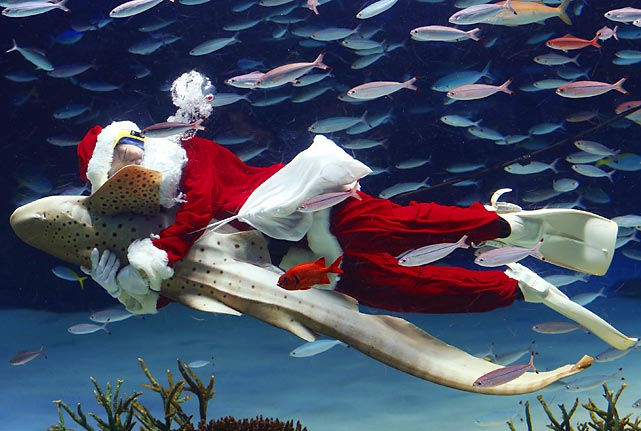 The age of aquarium: This year, Jolly Old St. Nick traded in his sleigh for the Zebra shark at the Sunshine International Aquarium in Tokyo.
