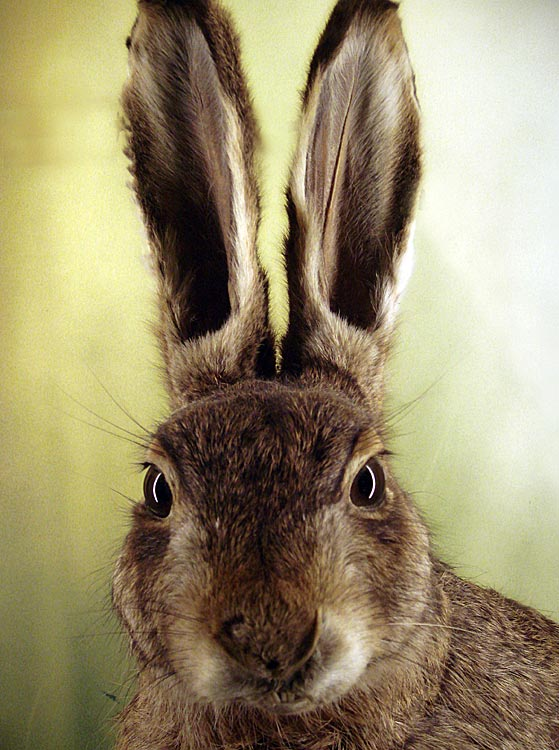 A pet bunny was decapitated in Sweden in what is thought to be part of an escalating feud between two figure skating clubs.