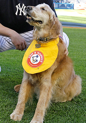Chase the Dog was 13, and started working for the Trenton Thunder in 2002.