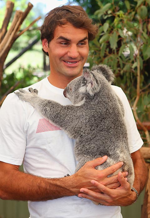 The tennis great, who sports a distinctive eucalyptus aftershave, attracted the attention and affection of an avid fan at Lone Pine Koala Sanctuary during the Brisbane International tournament at Australia's Queensland Tennis Center.