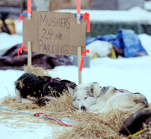 Aaron Burmeister's sled dogs take a well deserved rest after reaching the end of this week's arduous gallery. You, too, should put your dogs up and kick back.