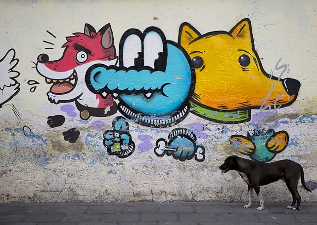 A wayward pooch stands by his handiwork in Xochimilco, on the southern edge of Mexico City.