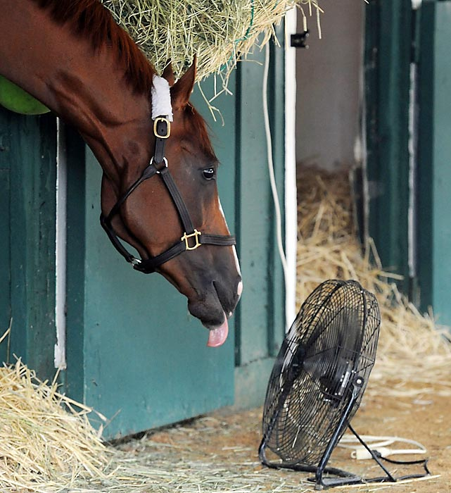 The winner of the Kentucky Derby and the Preakness greeted his biggest fan at Pimlico before taking the second leg of the Triple Crown.