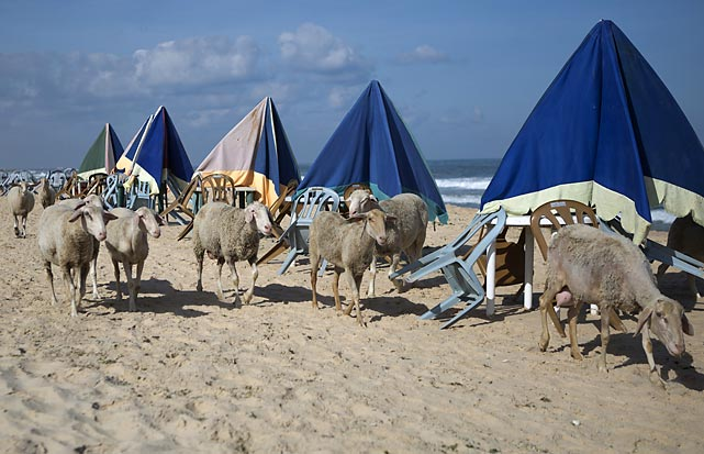 With the arrival of Memorial Day weekend comes beach season and the crowds were out in force in Gaza, bringing to mind that timeless musical classic, <italics>I'm On The Lamb, But I Ain't No Sheep</italics>.