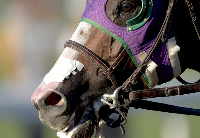 While California Chrome missed out on Triple Crown lore, he still raced among the greats at Belmont.