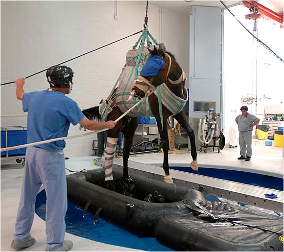 After undergoing surgery for his career-ending injury, Barbaro was held temporarily in a pool at the George D. Widener Hospital for Large Animals at the University of Pennsylvania. The school's Bolton Center is considered the top hospital for horses in the mid-Atlantic region.